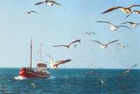 Möwen über einem Fischkutter